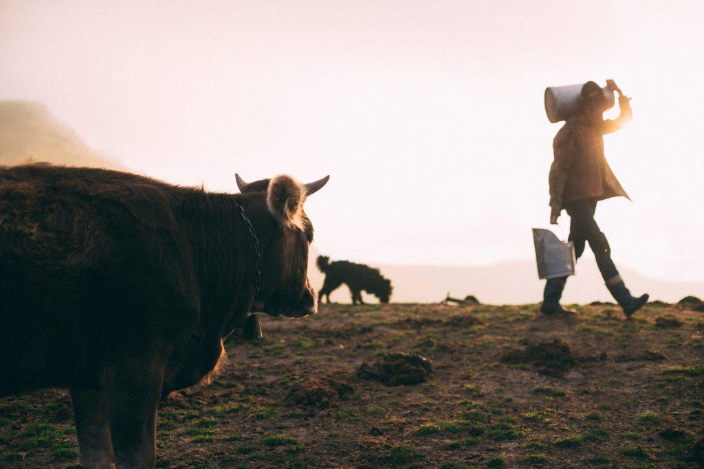 sữa bò có tốt không